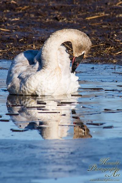 2016 Migratory Birds