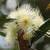 2016_ forest flower_Trinidad_IMG_1200
