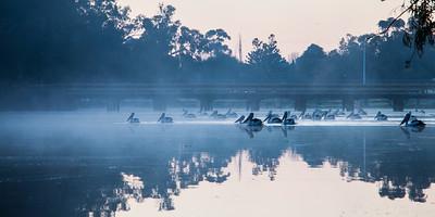 Early morning traffic jam at Lake Forbes