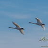 04092016birds013.jpg
