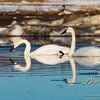 04062016birds76.jpg