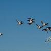 04062016birds31.jpg