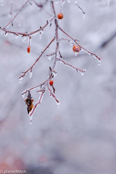2017-01-14 Ice Storm STL