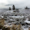 Light snow, Lamar Valley, Yellowstone National Park.