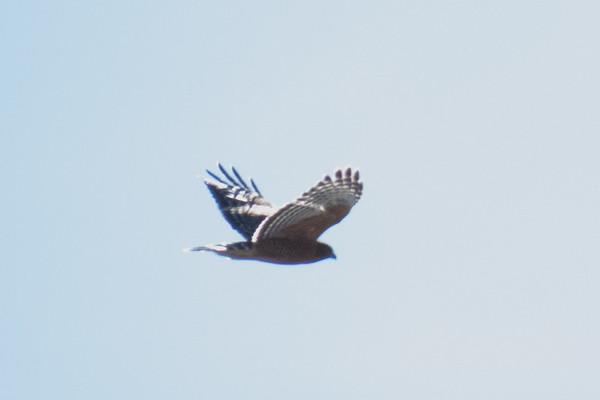 2017 Birds