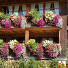 2017_ Austrian Alps house flowers_Oct_20170925_124529