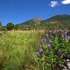 Hiking Kachina Trail on the San Francisco Peaks, Flagstaff, Arizona