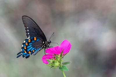 Butterfly...September 27, 2017