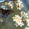 Butterfly...Austin, Texas...Feb 2017