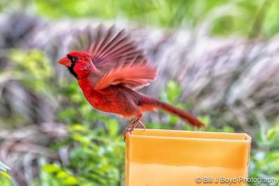 Cardinal...April 26, 2017