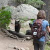 Bear cubs and Mama on Las Conchas trail