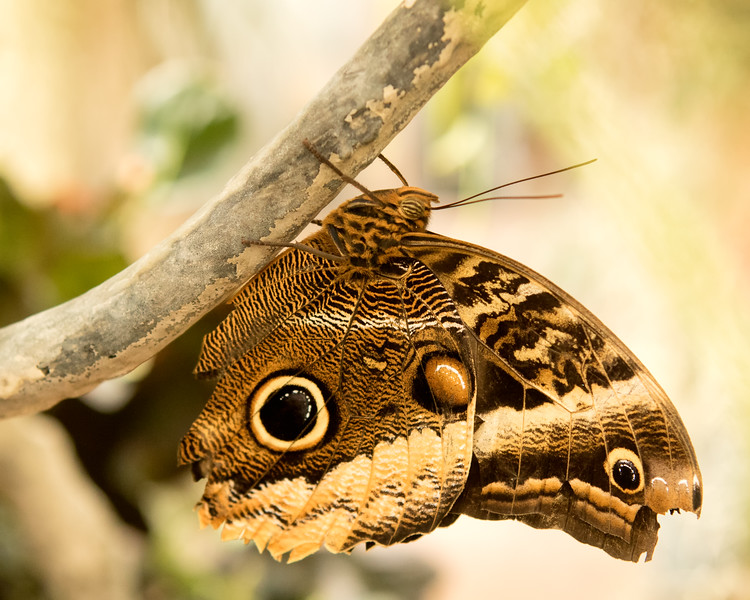 I took this at the butterfly house at the Tucson Botanical Gardens.