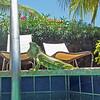 2018_ pool iguana_Aruba_April_IMG_1332