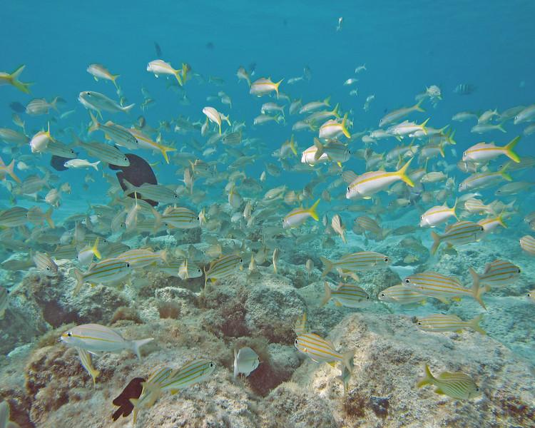 2018_ the fish bowl_ Aruba_April_IMG_1255
