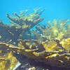 2018_ elkhorn coral_Mangel Halto_Aruba_April_IMG_1349