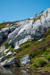 Mountain goats seemed happy I was there, but were waiting for me to leave