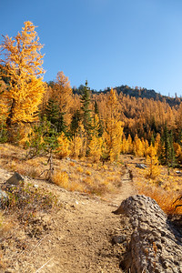 Entering the Carne Meadow area, first look at the larches