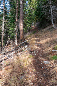 This trail was a bunch of switchbacks punctuated by some occasional longer uphill sections like this one