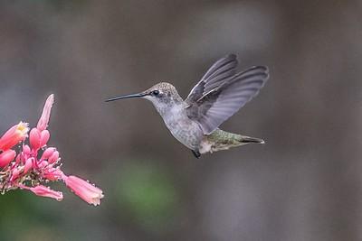 Hummingbird...June 13, 2018