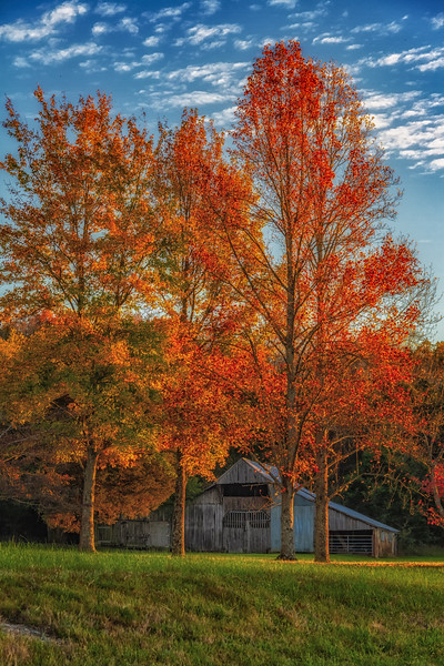 2018-11-06 Fall Trees and a barn