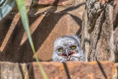 Owlet....April 12, 2019