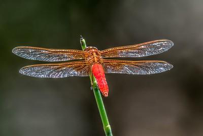 Dragonfly...May 27, 2019