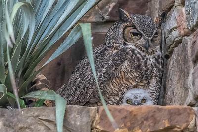 Athena and Owlet....April 9, 2019