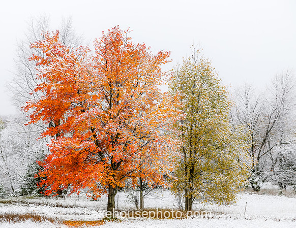Winter - 2019 Calendar November