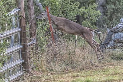 Deer...July 22, 2019