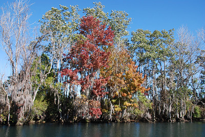 Florida does have fall colors!