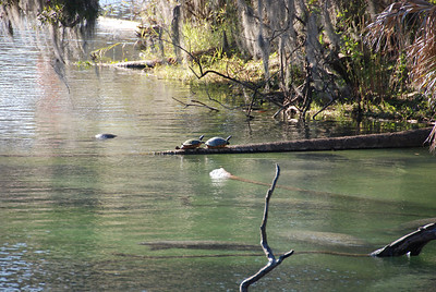 We counted at least 10 manatees and of course two stunning sunning turtles in the patch of water.