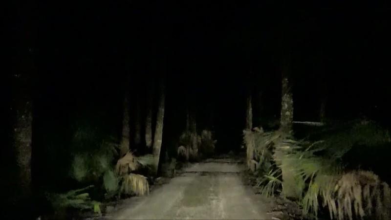 Swamp Video