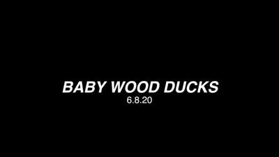 WOODDUCKS 6.8.20