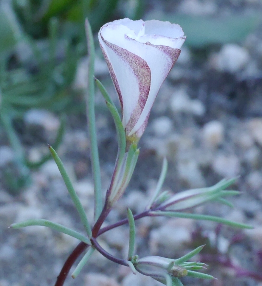 The outside of the petals had elegant stripes in a soft rose color.