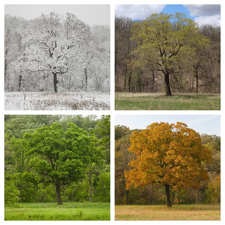 4 season collages