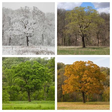 4 season collages