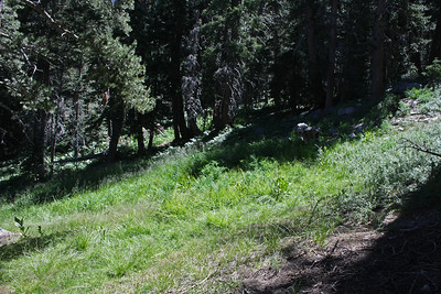 There were numerous small meadows along the way.  It is only like this up there in July and maybe August.