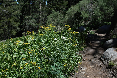 The trail passed right by numerous stands of wildflowers.