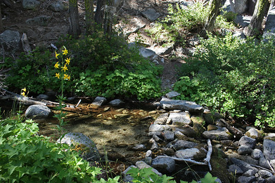 At the point where the trail crosses the Dark Water River, I discovered a rare lemon lily that was as tall as me.  Its scent was almost intoxicating, and filled an area about 80' in diameter.