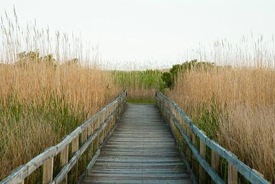 Sandbridge, Beach, Virginia, Nature
