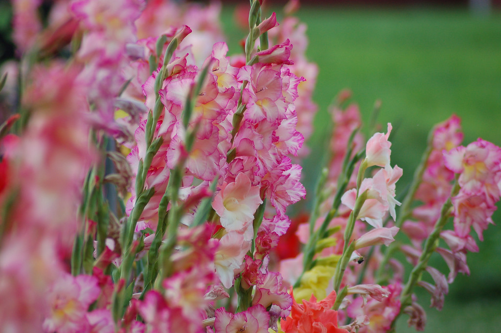 FlowersGLEN 012