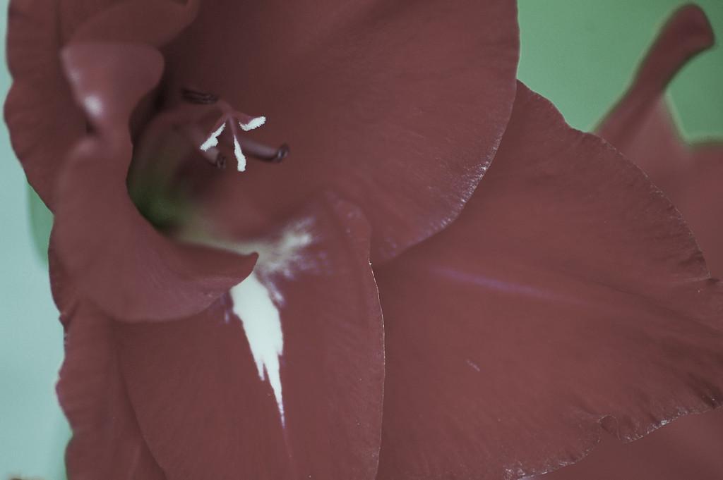 FlowersGLEN 023