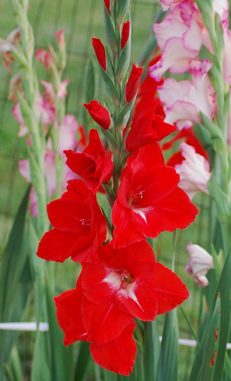 FlowersGLEN 002