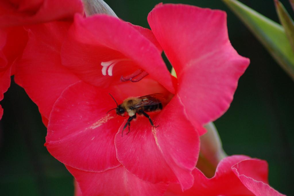 FlowersGLEN 015