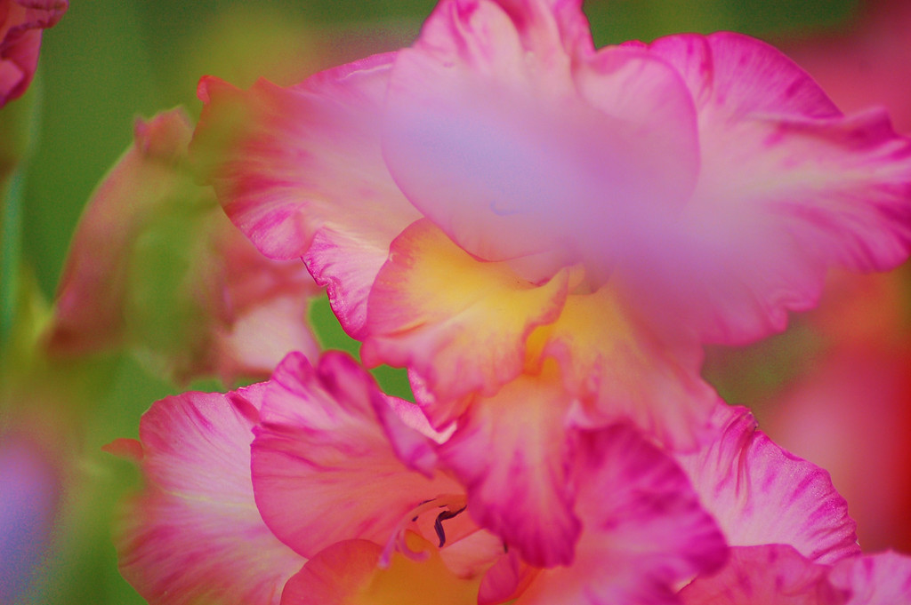FlowersGLEN 018