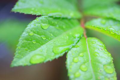 A Garden In The Rain