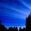 Cirrus<br /> Fingers of frost reached out over the Pacific Spirit forest.