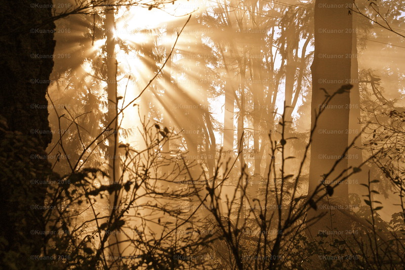 Copperburst<br /> A low mist hung over the cold forest - the dawning sun suffused the wooden cathedral with an awesome splendour of warmth and light.