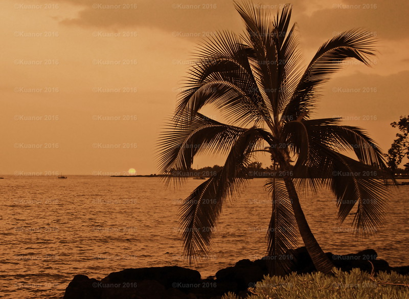 Friendly Fronds<br /> The warmth of the day suffused with the scent of sea and moist greenery dissipated over Kona bay, as the sun slipped slowly into night, and the friendly wind blew steady like an old friend: gentle and constant.