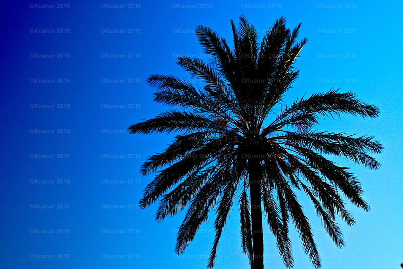 """Blue Palm<br /> """"Cross my palm with blue... and ye shall be granted solace,"""" whispered the wizened wytch of Acre, with viperous veiled eyes and a hidden heart."""